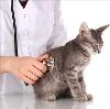 Ветеринарные клиники в Илеке